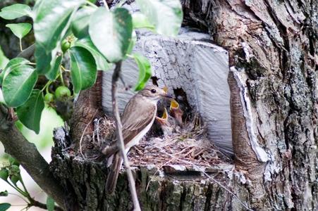 [Фотография] Соловьиное гнездо 22 июня